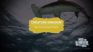Creature Kingdom: Hammerhead Shark