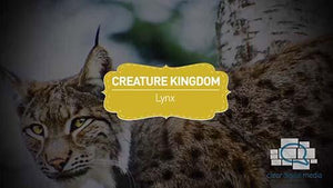 Creature Kingdom: Lynx
