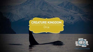 Creature Kingdom: Orca