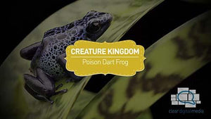 Creature Kingdom: Poison Dart Frog
