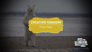 Creature Kingdom: Polar Bear