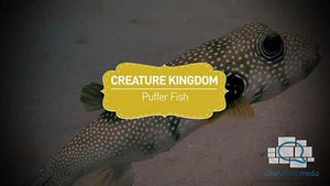 Creature Kingdom: Puffer Fish
