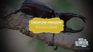Creature Kingdom: Rhinoceros Beetle