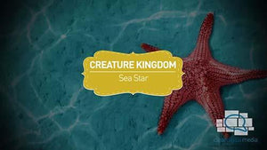 Creature Kingdom: Sea Star