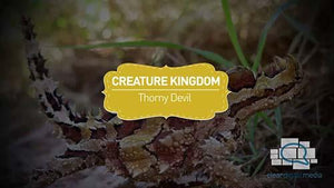 Creature Kingdom: Thorny Devil