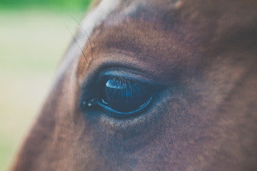 HORSE SENSE: Celebrating our four-hooved friends