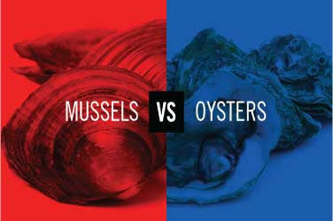 Mussels vs. Oysters