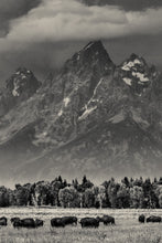 Load image into Gallery viewer, Matte Print | The US National Parks: Grand Teton 1058BW - Lemonee on the Hills