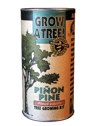 Pinon Pine Tree Growing Kit - Upland Road Eco-Boutique