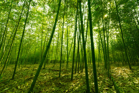 bamboo field raw material for wall decor