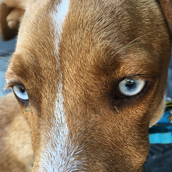 Beautiful dog eyes