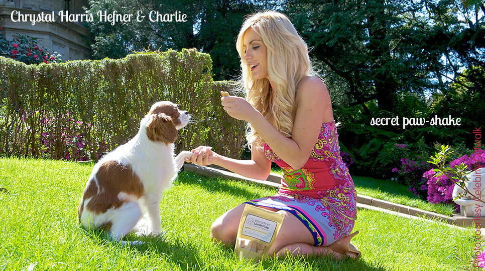 Crystal Harris Hefner feeding her dog Charlie Biscuits by Labmchop