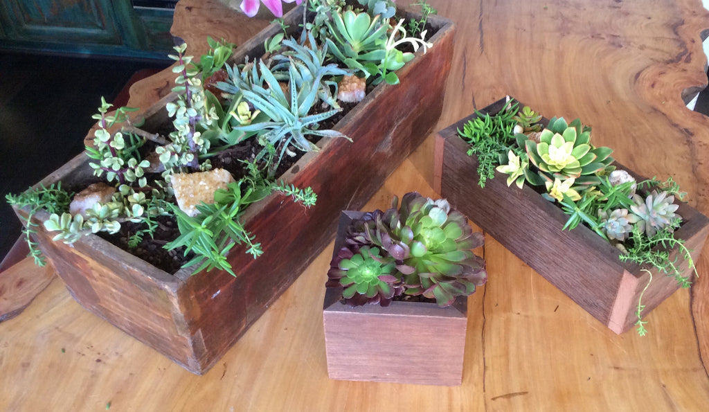 Hand Made Wood Boxes filled with Succulents