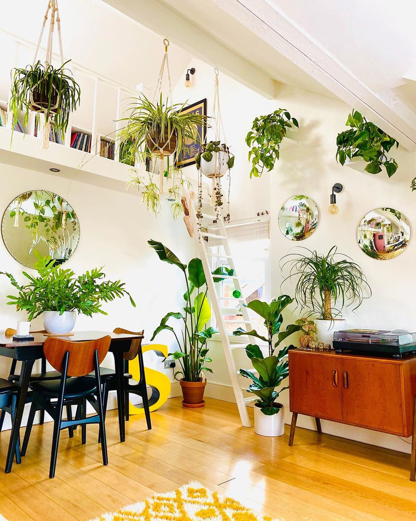 bright room full of plants