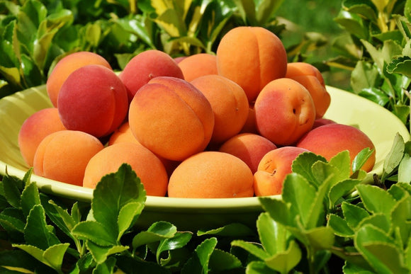 Are Apricots Good For You? | Fruit Of Spirit