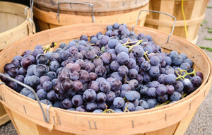 Is Concord Grape Juice Good for You?