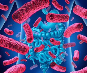 What Is Health Benefits Of Lactobacillus Acidophilus?