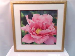Gold Stenciled Framed Pink Rose Art