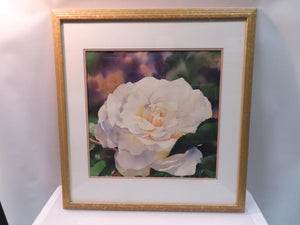 Gold Stenciled Framed White Rose Art