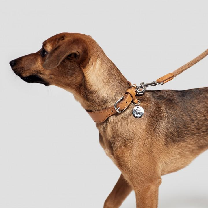 Dog Collar Vondel Park - Toffee Dog Collar Cloud7