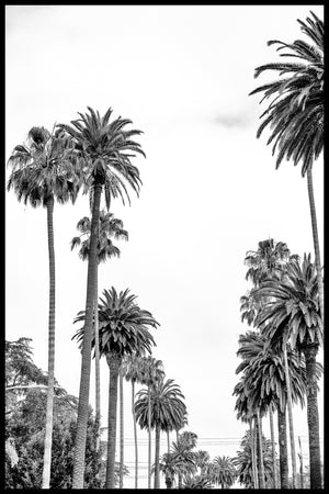 Black and white photography of palm trees in Los Angeles