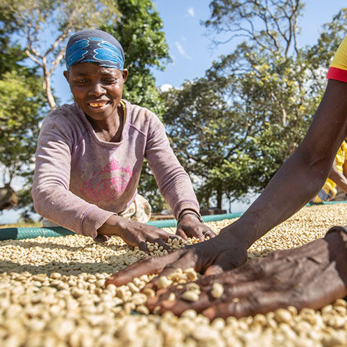 local farmers sorting coffee beans
