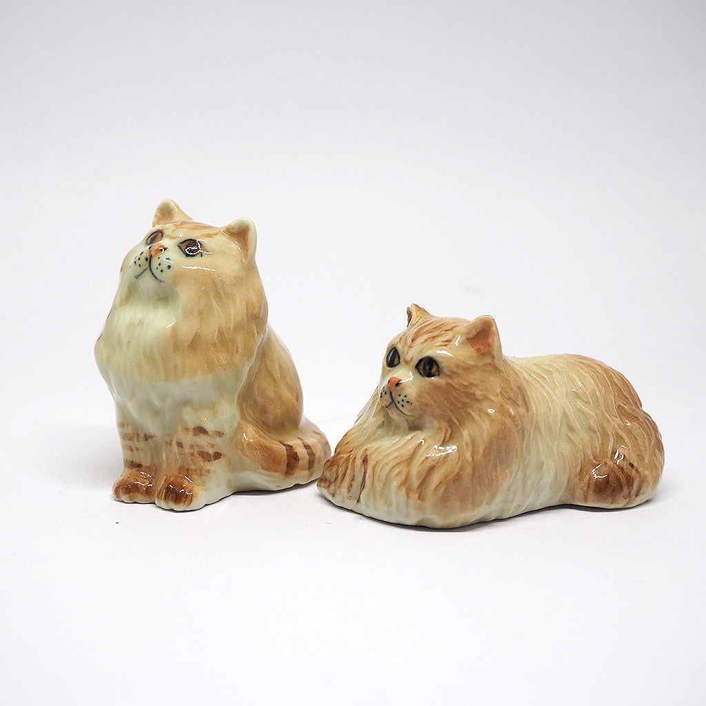Couple of Brown Persian Cat