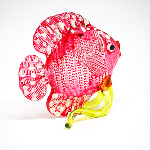Glass Red Dicus Fish