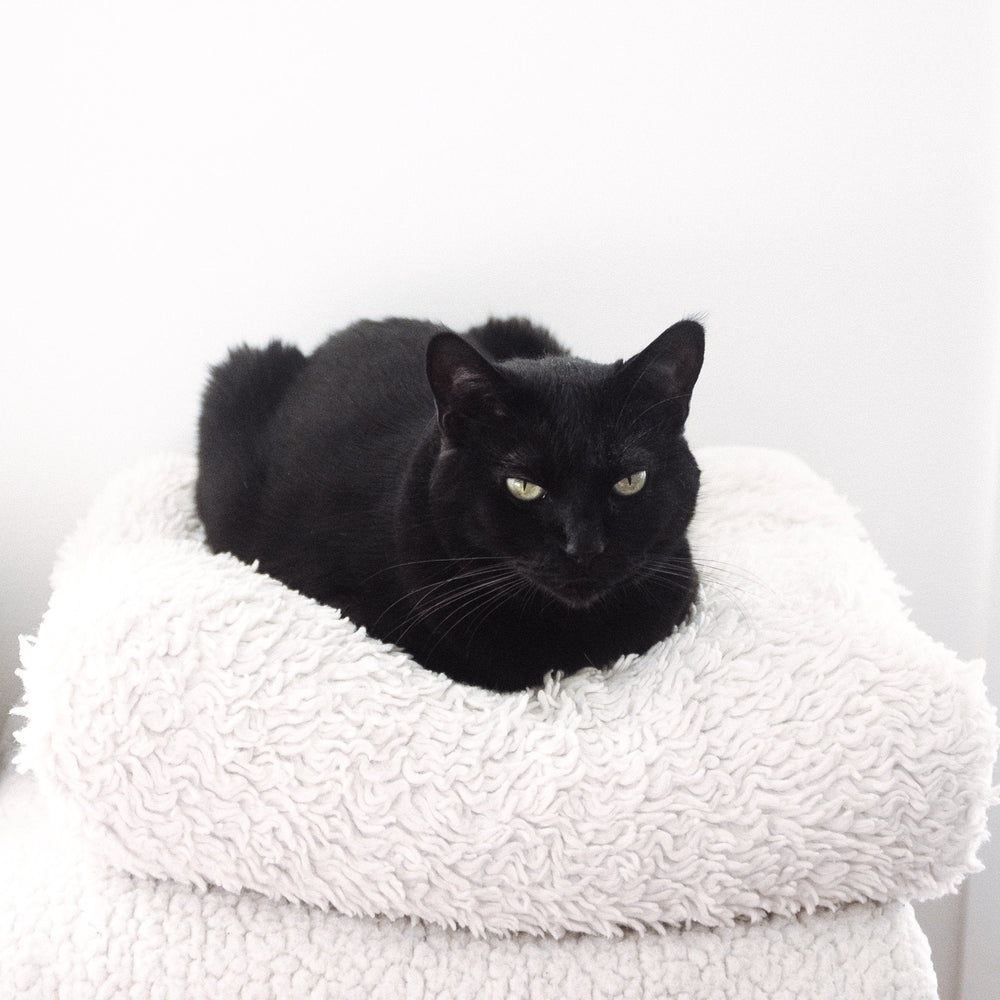 Load image into Gallery viewer, Loaf Cat Pin