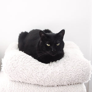 Black Cat Loaf