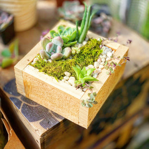 Succulent DIY Kit Planting Guide