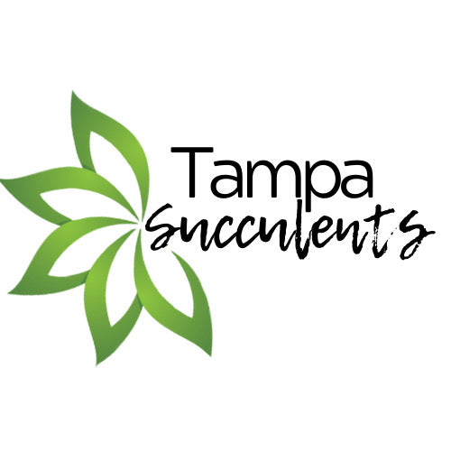 Tampa Succulents, Waterwise plants and DIY Workshops