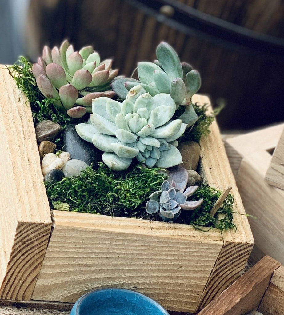 6x6 Take and Make DIY KIT in repurposed wooden planter