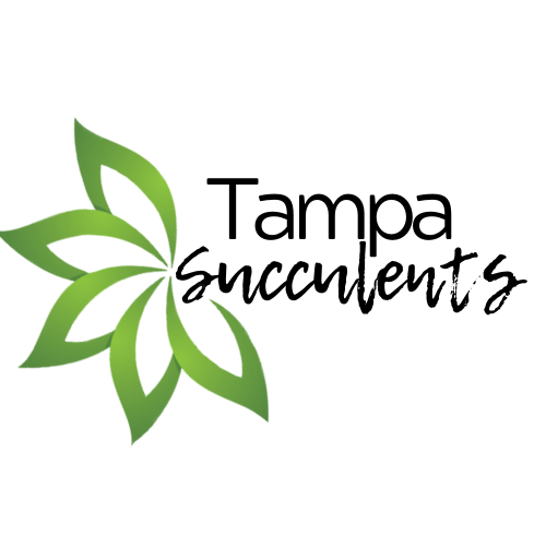Tampa Succulents Online Store Gift Card