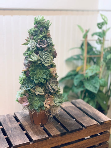 Made To Order Succulent Holiday Trees