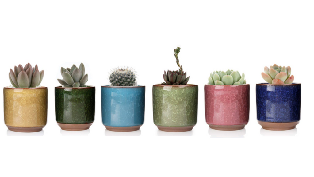"Individual 3""  Mini Succulent Planter 