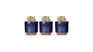 "DIY KIT Individual 3""  Mini Succulent Planter"