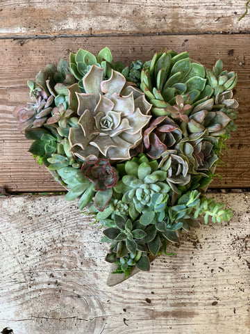 Custom Heart Shaped Succulent planter