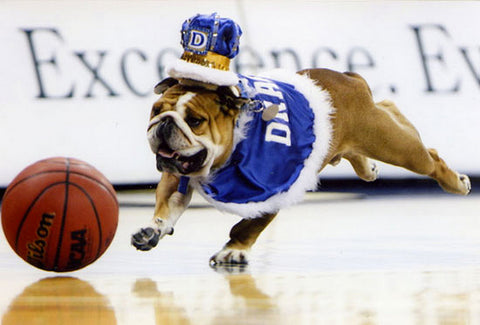 Porterhouse in his robes chasing a basketball