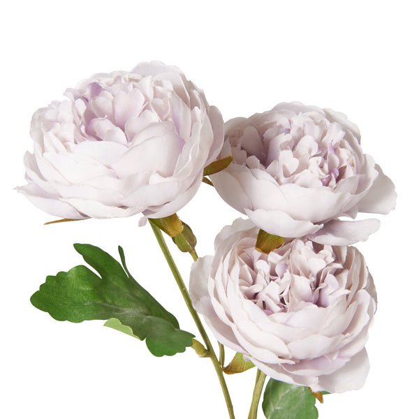 20SS ART FLOWER RANUNCULUS LP