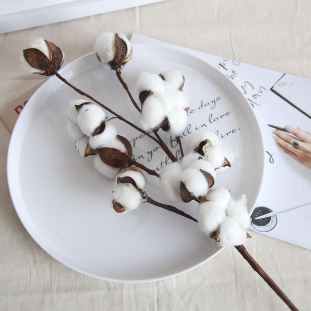 Plants Cotton Stems Homeplistic