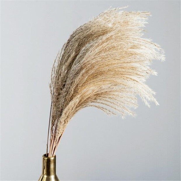 Plants Dried Pampas Grass Homeplistic