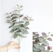 Plants Eucalyptus Leaves Homeplistic