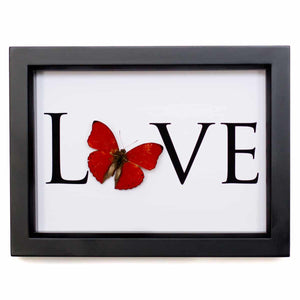 Butterfly - Love Art