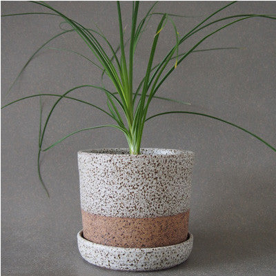 Wingnut & Co Planter - Small