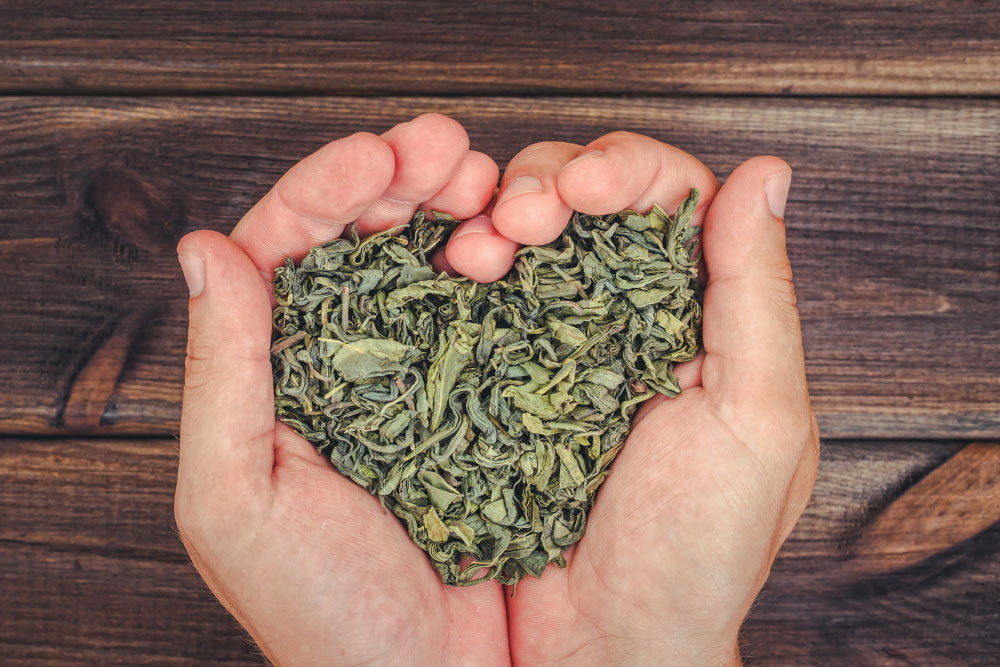 10 Reasons Why you Should be Drinking Green Tea