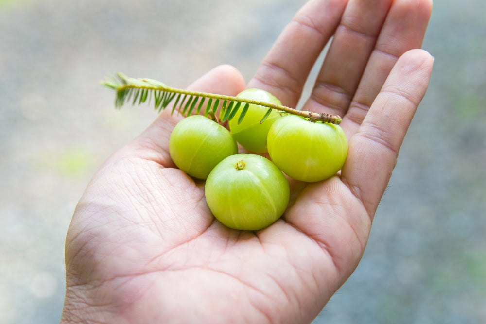 What are the Health Benefits of Amla?