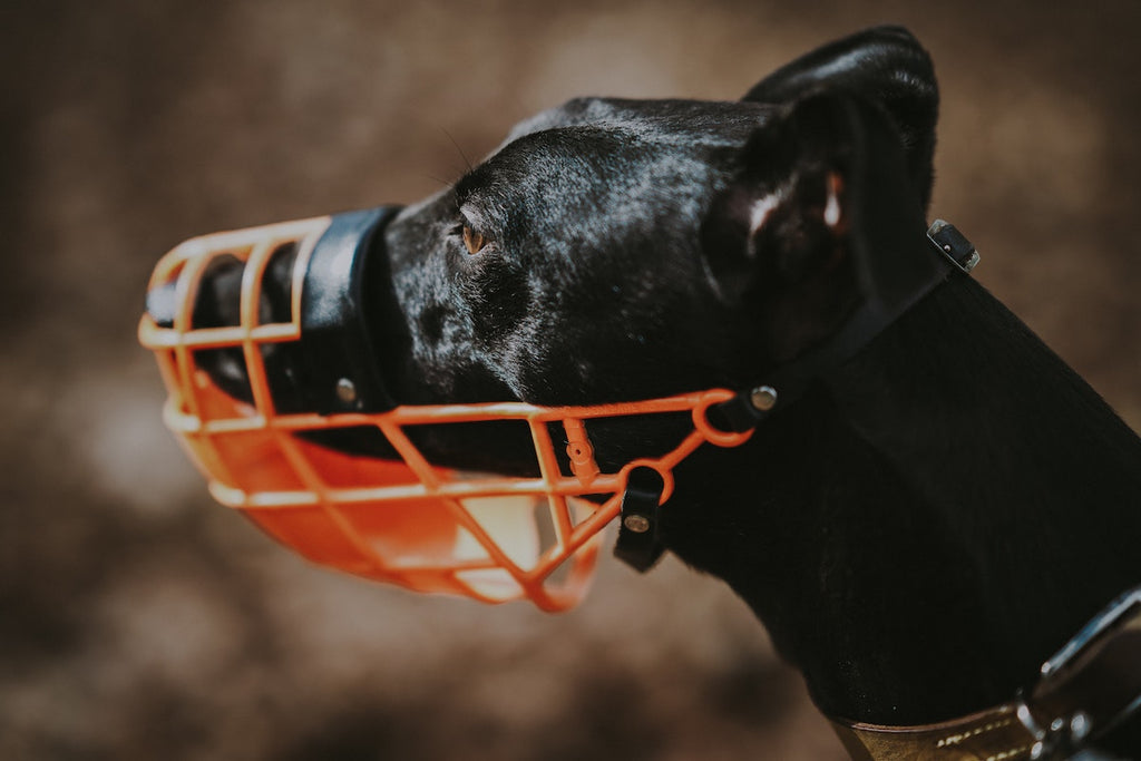 Should My Dog Be Muzzle Trained?