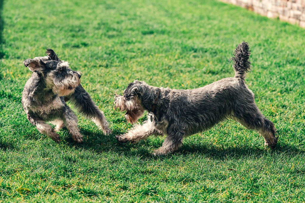 Normalizing Selective Socialization For Dogs