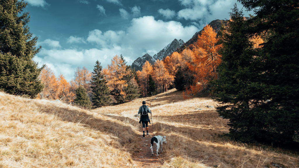 A Guide to Leave No Trace Hiking with a Dog